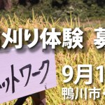 【終了】9月1日・房総半島 鴨川市の棚田で稲刈り体験!!