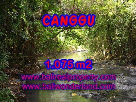 Jual tanah di Canggu Bali 10.75 Are di Canggu Pererenan