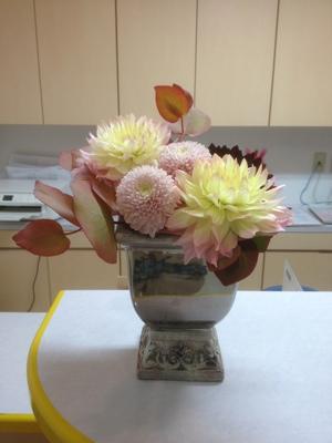 ダリア ピンポンマム コルダータ 受付の花