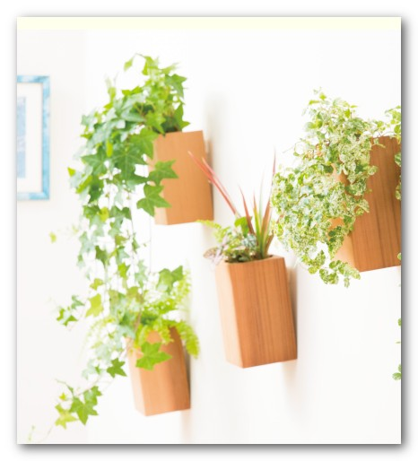 壁掛け 観葉植物