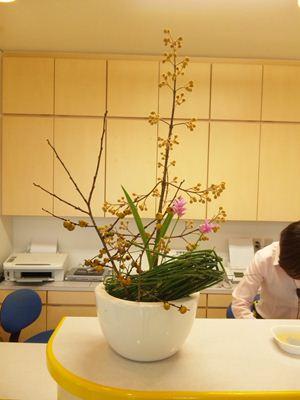桐 トクサ クルクマ 受付の花