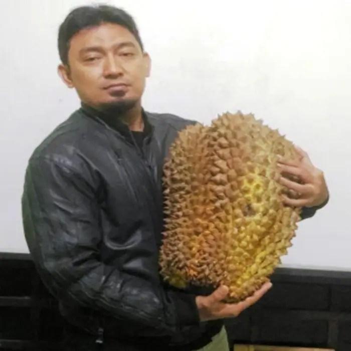 bibit durian bawor