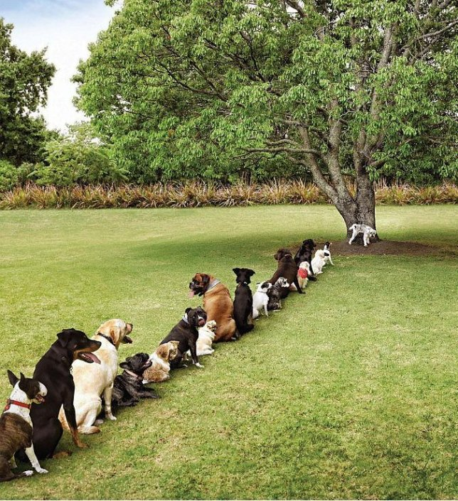 Dogs Wish We Would Stop Cutting All The Trees