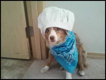 My wonderful canine chef assistant