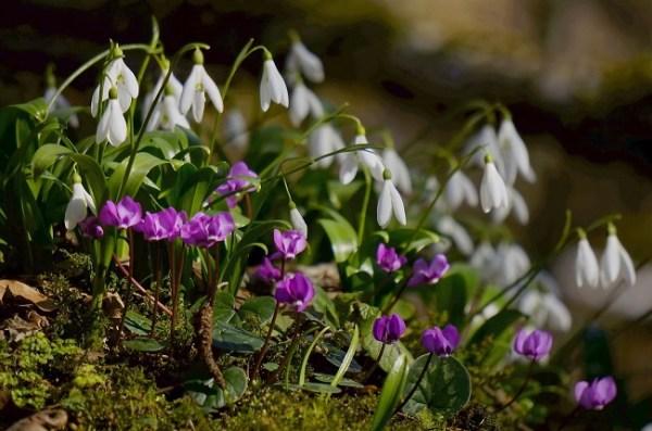 Растения Кавказа Фото С Названиями