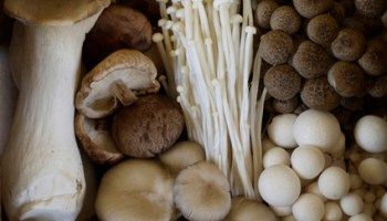 """photograph courtesy of nouvelle mushrooms"""
