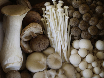 photograph courtesy of nouvelle mushrooms for my Gnocchi With Mushrooms