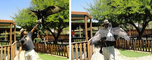 varreaux's eagle experience