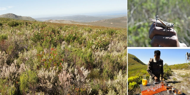 One Of The Activities At Grootbos 4 x 4 Botanical Tour