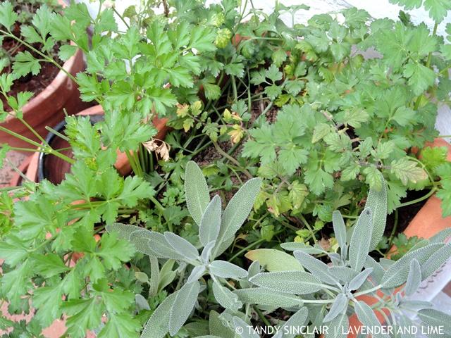 Herb Planter In My Garden May 2016