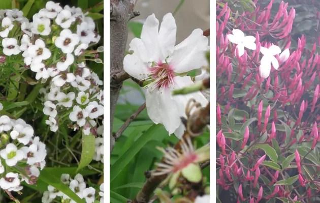 white-flower-collage
