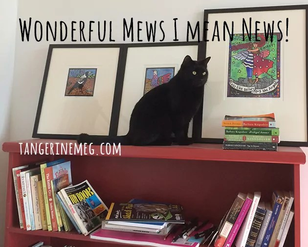 black cat on a red book shelf