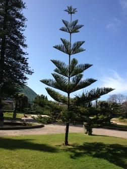 funny tree:)