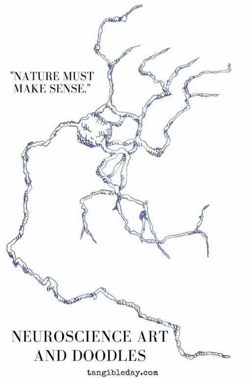 neuron doodles and art - drawing neurons and neuroscience art - the secret of complexity - a neuron grows from nothing - a drawing with pen and paper- nature must make sense