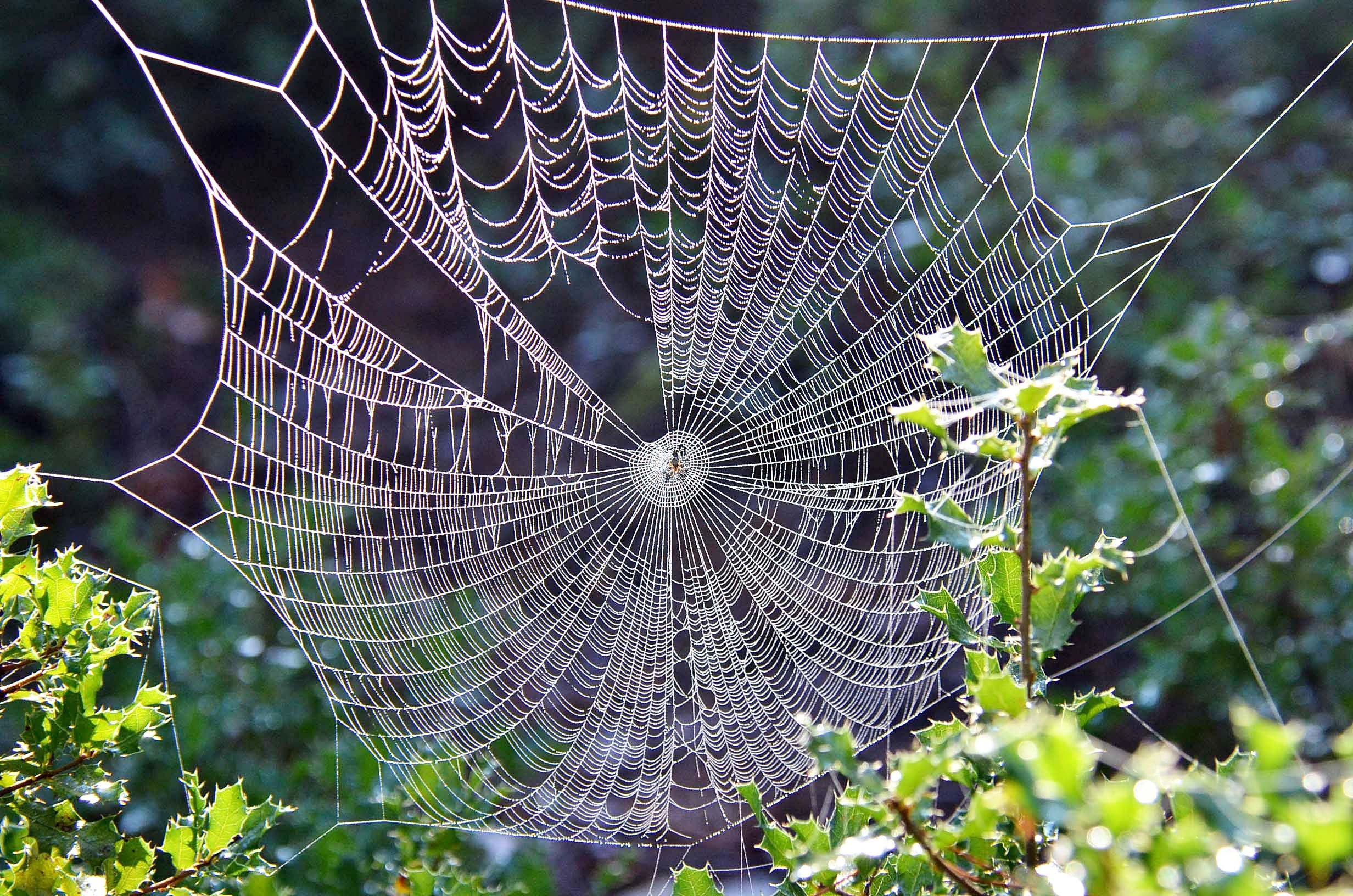 Web of Connections – Will's Wisdom