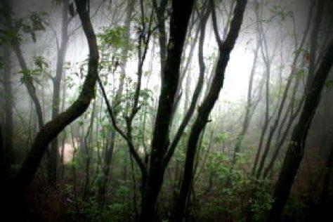 Dense trees at Shivapuri National Park