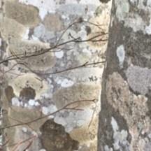 bark & branches