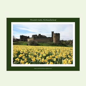 Alnwick Castle Daffodils A3 print