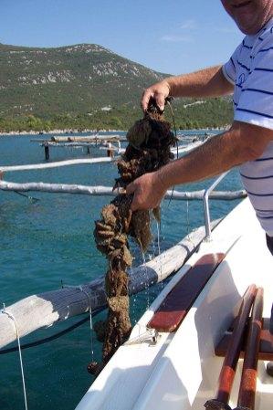 CroatiaPhotoMix2010 348