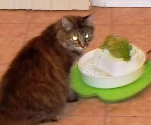 aug 1st cat2