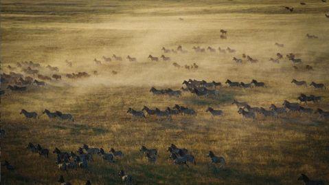 The Makgadikgadi zebra migration_940_529_80_s_c1