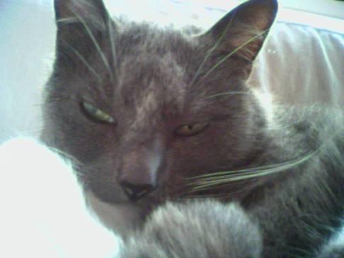 Zinc kitty