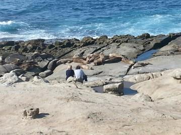 La Jolla Beach and Sea Lions