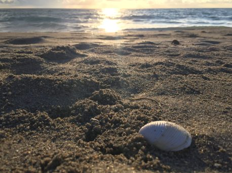 Beach_Sand_Shell_Sunset (8)