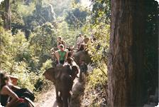Riding the elephants on hill tribe trek