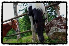 Horses at Finca el Cisne