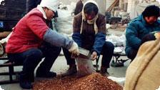 Russia, Herbalists at work in Anhui