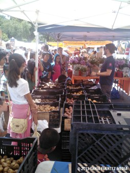 STUDENTS LEARN ABOUT POTATOES AT UNION SQUARE GREENMARKET