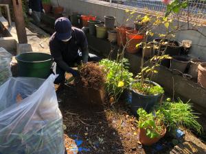 植木鉢の片付け