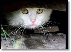 猫のフラッシュ撮影