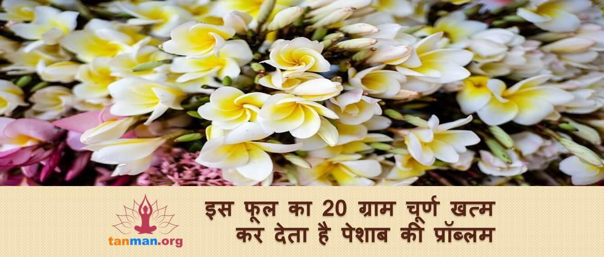 इस फूल का 20 ग्राम चूर्ण खत्म कर देता है पेशाब से जुड़ी बीमारियां
