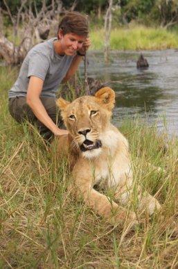Lions in Zambia 2