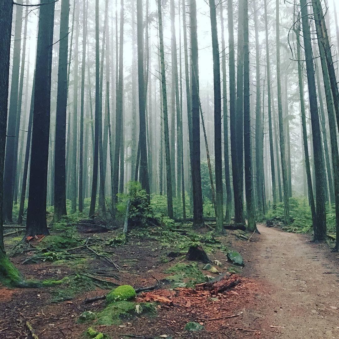 Trees in Pacific Spirit Park