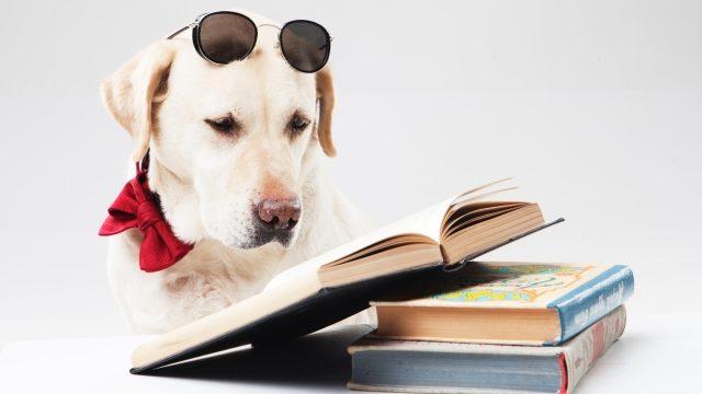 本を読んでいる犬