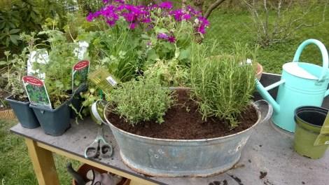 Planting av urter