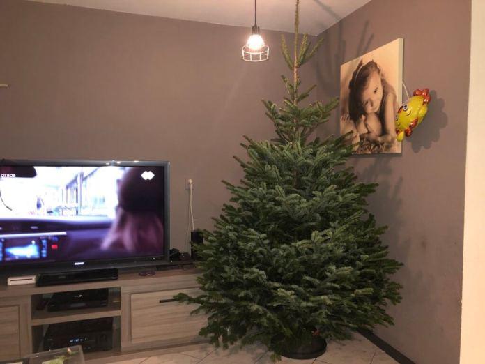 Dag Sinterklaas en hallo Kerst kerstboom neerzetten