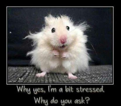 y yes i am a bit stressed...y do u ask