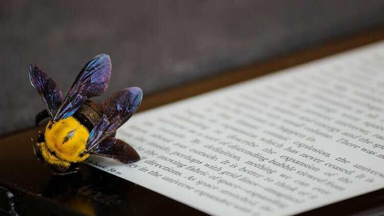 cover letter translation