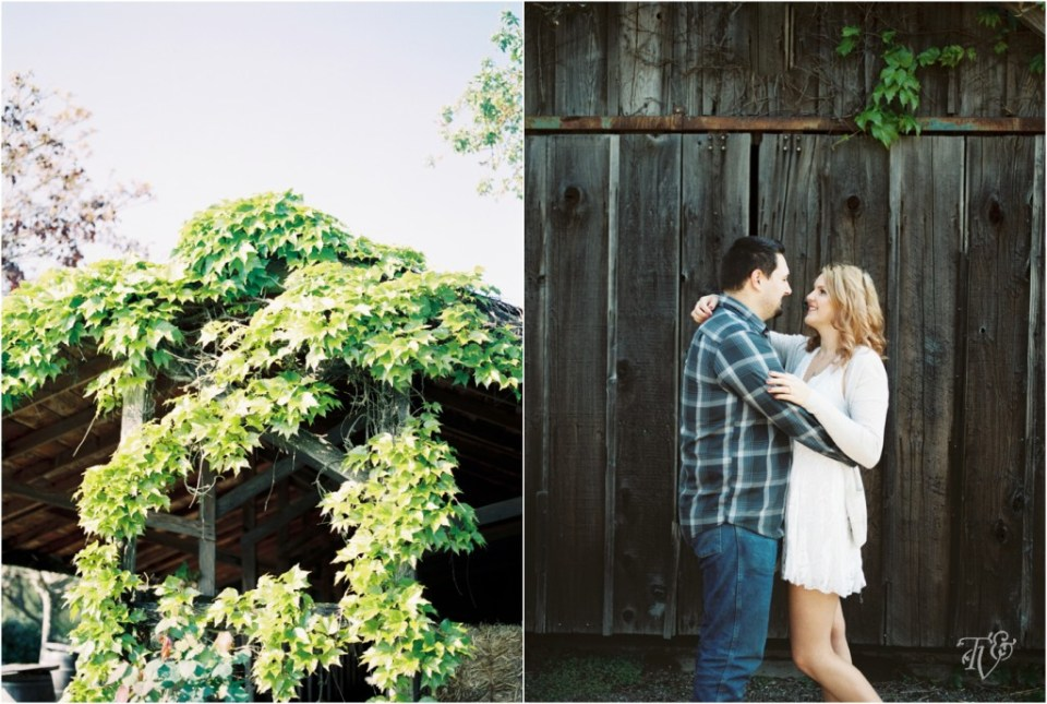 Iron Horse Vineyards Sebastopol Winery Wedding Photographer Isobel & Elliot Engaged22