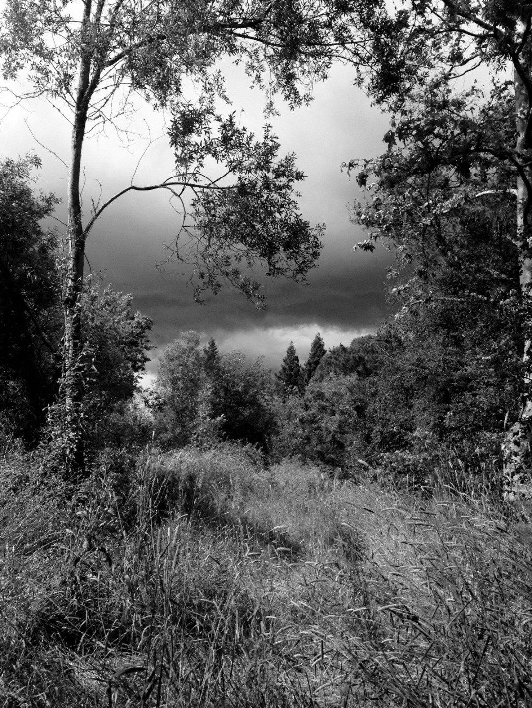 Black and white landscape with omnibus dark clous