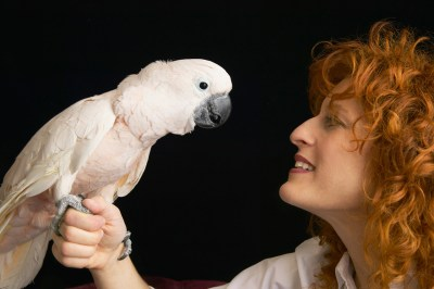 Parokeet and redheaded woman face to face