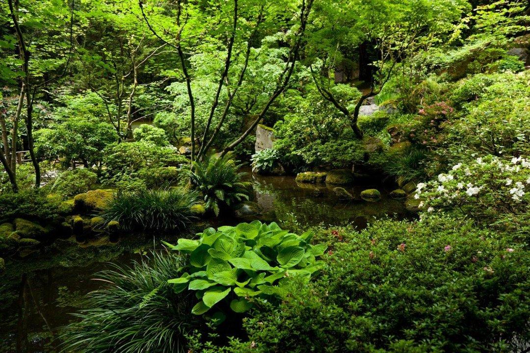 Landscape of pond at Portland gardens