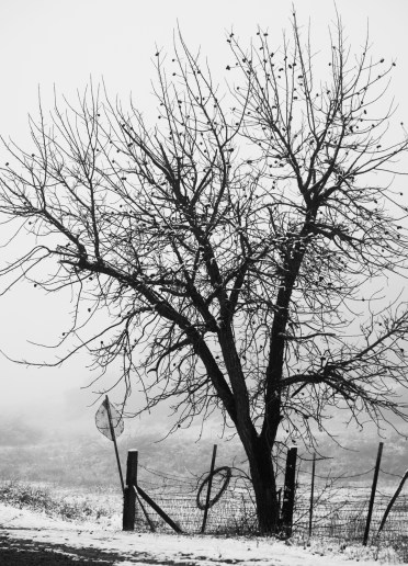 Black and white shot of nude tree in the winter