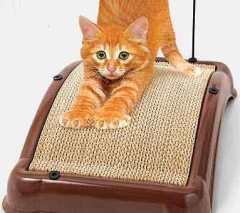 4 Hal penting memelihara anjing dan kucing