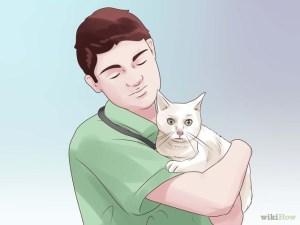 Jenis obat pada anjing dan kucing dan cara memberikannya