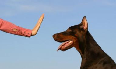 Sumber : dogs.lovetoknow.com